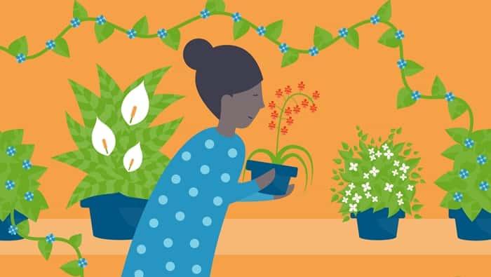 공기정화 식물